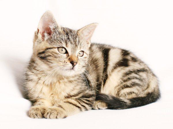 Wie oft sollten Sie Ihre Katze entwurmen